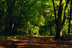 Mixed forest Stock Images