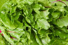 Mixed fresh, dark, leafy greens royalty free stock images