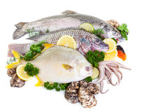 Mixed Fresh Fish. Fresh raw fish display with oysters and squid on a white background Stock Image
