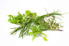 Mixed fresh herbs royalty free stock photography