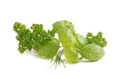 Mixed fresh herbs Stock Photography