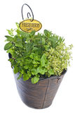 Mixed Fresh Herbs In A Basket Royalty Free Stock Images