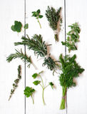 Mixed fresh herbs Royalty Free Stock Images