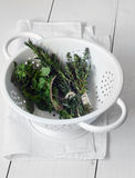 Mixed fresh herbs Stock Photography