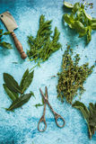 Mixed fresh herbs and vintage mezzaluna Royalty Free Stock Photography