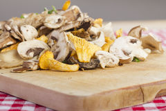 Mixed fresh mushrooms Royalty Free Stock Photography