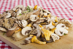 Mixed fresh mushrooms Stock Photography