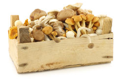 Mixed freshly harvested mushrooms Royalty Free Stock Photo