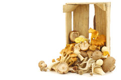 Mixed freshly harvested mushrooms Royalty Free Stock Photography