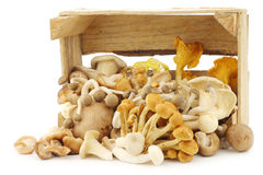 Mixed freshly harvested mushrooms Royalty Free Stock Photos