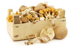 Mixed freshly harvested mushrooms Royalty Free Stock Images
