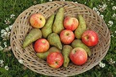 Mixed fruit on basket Stock Photo