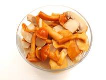 Mixed Fungi Royalty Free Stock Images