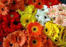Mixed gerbera daisy bouqet Stock Photos