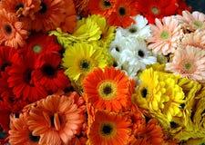 Mixed gerbera daisy bouqet. Bouqet of mixed colorful gerbera daisy flowers stock photos