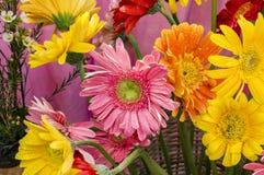 Mixed gerbera sticks and flowers Stock Photos