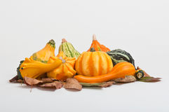 Mixed Gourdes. A selection  of gourdes on autumn leaves Royalty Free Stock Image