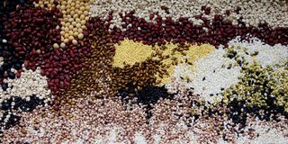 Mixed grains. Various grains, mixed grains, nutrition Royalty Free Stock Photo