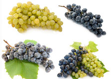 Mixed grape. Fresh, different. Bunch of raw grape in a white background Royalty Free Stock Photography