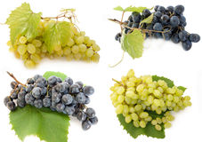 Mixed grape. Fresh, different. Bunch of raw grape in a white background Royalty Free Stock Image