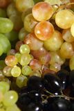 Mixed Grapes closeup. Armenian mixed Grapes on white stock photography
