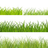 Mixed green grass Royalty Free Stock Photos
