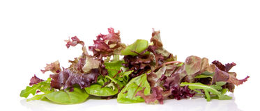 Mixed green and red lettuce Stock Images
