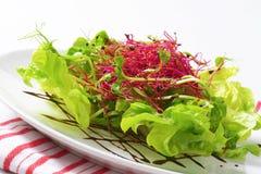 Mixed green salad Royalty Free Stock Photo