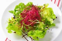 Mixed green salad Stock Image
