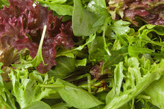 Mixed Green Salad Leaves Royalty Free Stock Photos