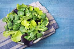 Mixed green salad leaves in a bowl. On a blue background royalty free stock images