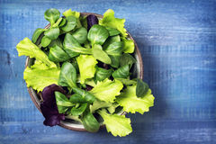 Mixed green salad leaves in a bowl. On a blue background stock images