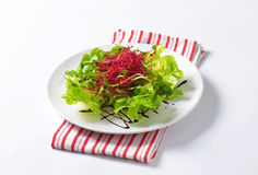 Mixed green salad Royalty Free Stock Photography