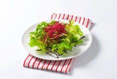 Mixed green salad Royalty Free Stock Photography