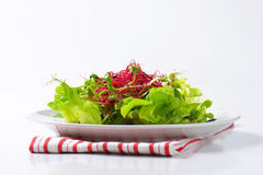 Mixed green salad Royalty Free Stock Photos