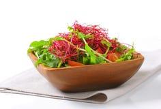 Mixed green salad Stock Photos