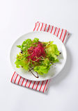 Mixed green salad Stock Images
