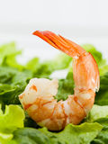 Mixed green salad with shrimps Royalty Free Stock Images
