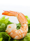 Mixed green salad with shrimps . Stock Images