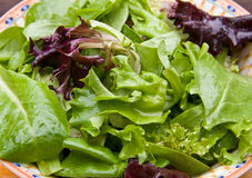 Mixed Greens Stock Image