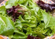 Mixed Greens Stock Image