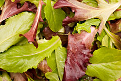 Mixed greens Stock Photography
