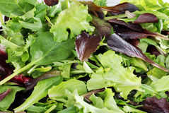 Mixed greens lettuce background Stock Photography