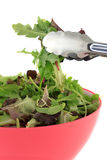 Mixed greens for salad Royalty Free Stock Photography