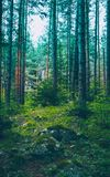 Mixed greenwood forest. Photo depicting dark misty evergreen pin. E tree backwoods. Summertime Stock Photos