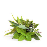 Mixed Herb Leaves Royalty Free Stock Images