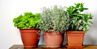 Mixed herbs. Mix of potted herbs for cooking Stock Images