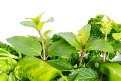 Mixed herbs Royalty Free Stock Image