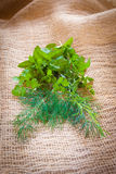 Mixed herbs - dill, cilantro, mint, basil, tarragon and rosemary. On a burlap background Stock Images