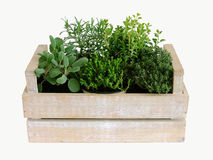 Mixed herbs Stock Image